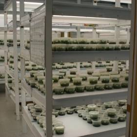 Growth room for the  tissue culture vials