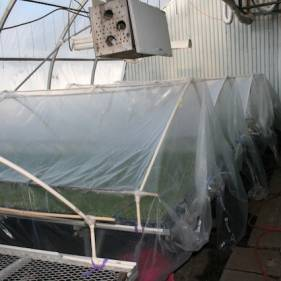 Acclimatation (hardening off) in the greenhouse